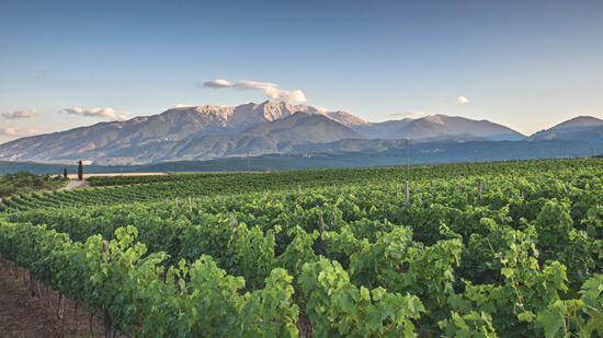 Mount Olympus and Vineyards | Hotel Villa Sevasti